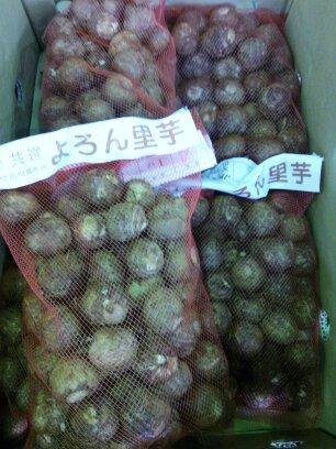 石川芋(よろん)
