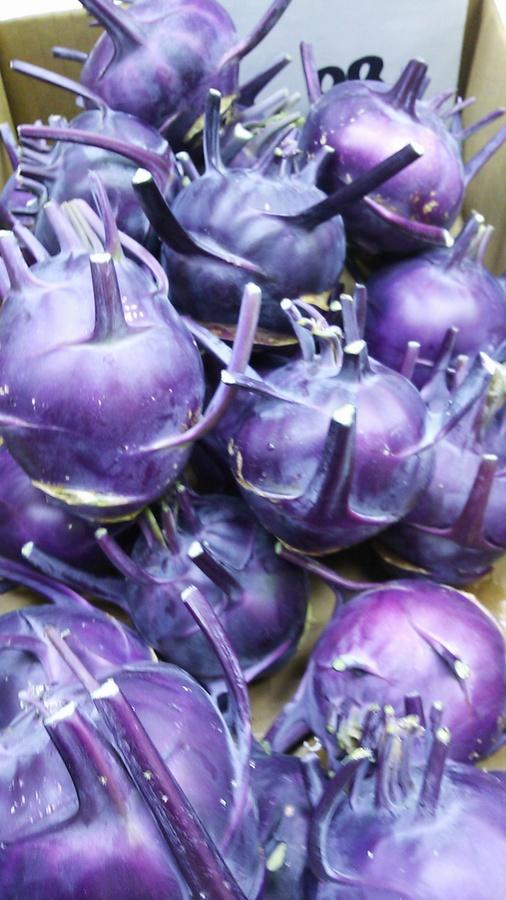 コールラビ(紫)