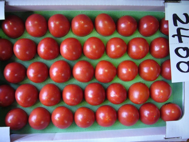 シュガートマト