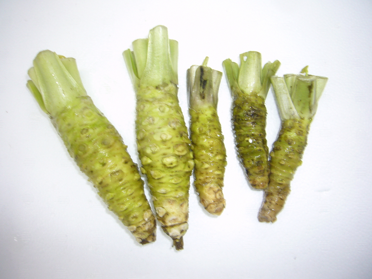 山葵 青種