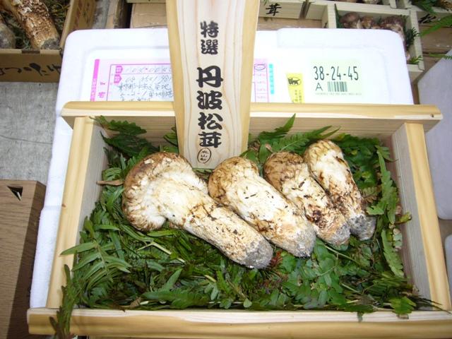 京都 京北 宇野町産松茸