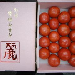 麗フルーツトマト