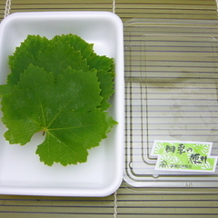 山葡萄(やまぶどう)の葉